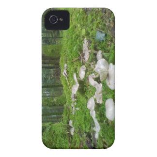Forest mushroom  Blackberry Bold Case