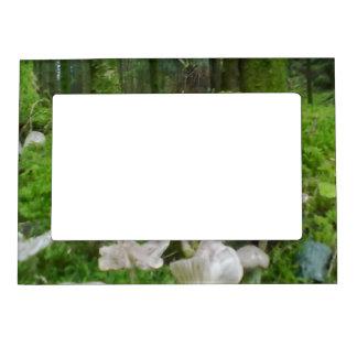 Forest mushroom magnetic picture frames