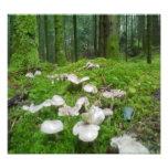 Forest mushroom photo print