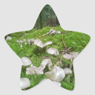 Forest mushroom star sticker