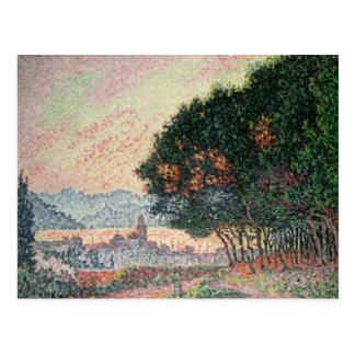 Forest near St. Tropez, 1902 Postcard