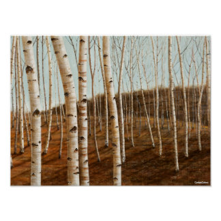 Forest of Birches Poster