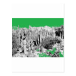 Forest of Cacti Post Card