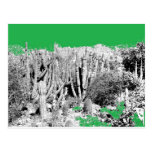 Forest of Cacti Post Cards