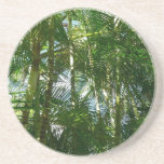 Forest of Palm Trees Tropical Green Drink Coaster