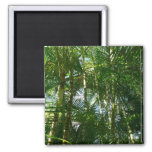 Forest of Palm Trees Tropical Green Magnet
