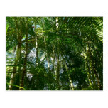 Forest of Palm Trees Tropical Green Postcard