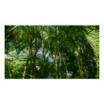 Forest of Palm Trees Tropical Green Posters