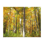 Forest of Yellow Leaves Autumn Nature Photography Canvas Print
