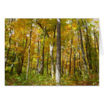 Forest of Yellow Leaves Autumn Nature Photography Card