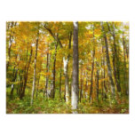 Forest of Yellow Leaves Autumn Nature Photography Photo Print