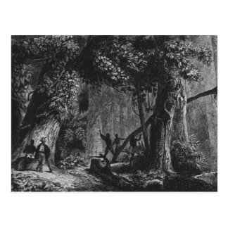 Forest Opening from 'Bresil, Columbie at Postcard