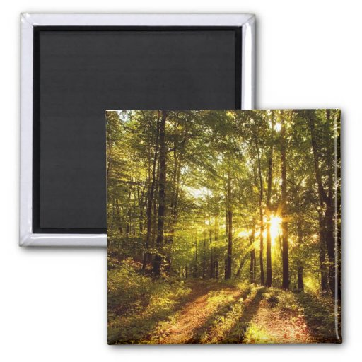 Forest Path - 2 2 Inch Square Magnet