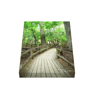 Forest path boardwalk Stretched Canvas Print
