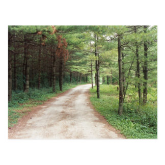 Forest Path Postcard