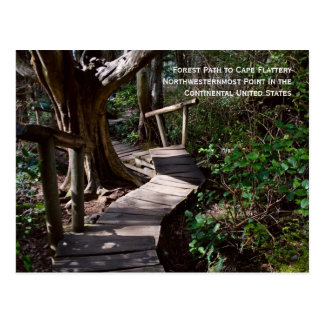Forest Path to Cape Flattery Postcard