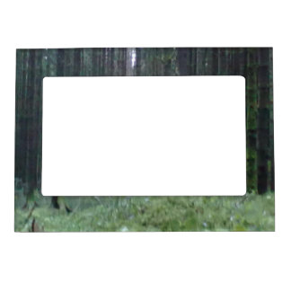 Forest photo picture frame magnet