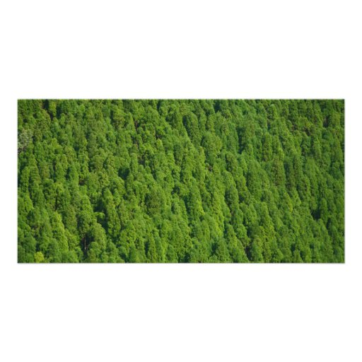 Forest Picture Card
