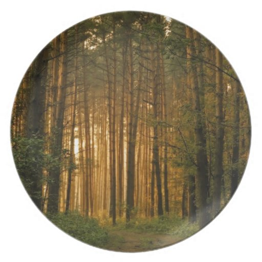 Forest Plate