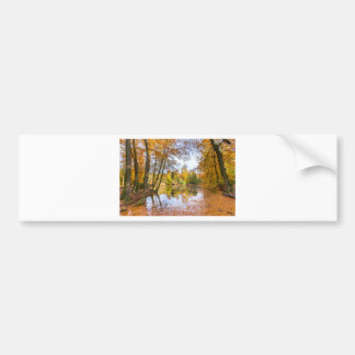 Forest pond covered with leaves of beech trees bumper sticker