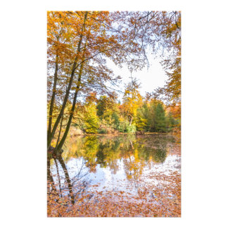 Forest pond covered with leaves of beech trees stationery