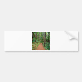 Forest Quiet Trail Columbia River Gorge Bumper Stickers