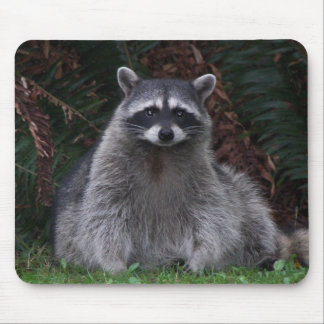 Forest Raccoon Mousepad