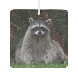 Forest Raccoon Photo Air Freshener