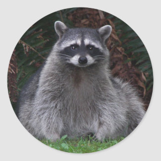 Forest Raccoon Photo Classic Round Sticker