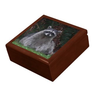 Forest Raccoon Photo Jewelry Box