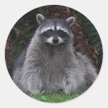 Forest Raccoon Round Sticker