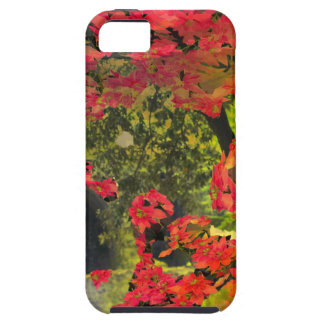 Forest , red flowers iPhone SE/5/5s case