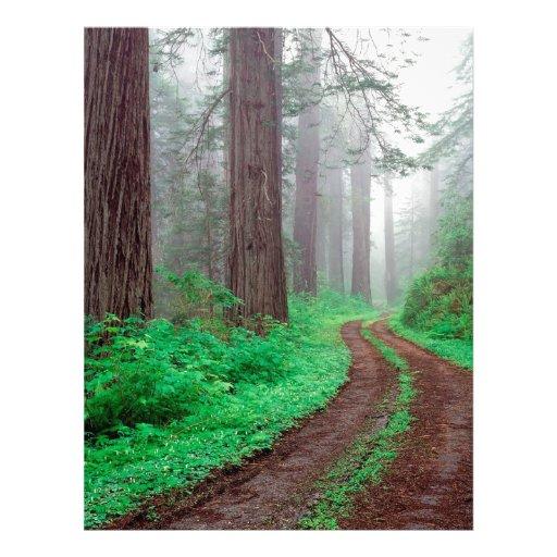 Forest Redwood Custom Letterhead