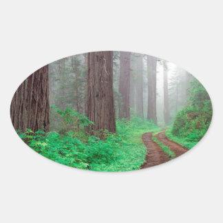 Forest Redwood Oval Sticker