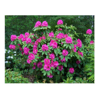 Forest Rhododendron Postcard