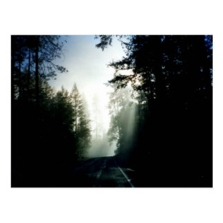 Forest road postcard