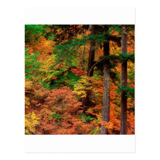 Forest Russeted Woodl Cascade Mountains Postcard