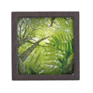 Forest scene in Acadia National Park, Maine. Gift Box