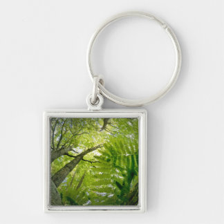 Forest scene in Acadia National Park, Maine. Keychain