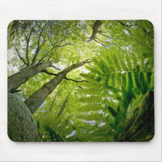 Forest scene in Acadia National Park, Maine. Mouse Pad