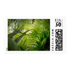 Forest scene in Acadia National Park, Maine. Postage