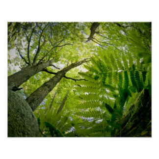Forest scene in Acadia National Park, Maine. Poster
