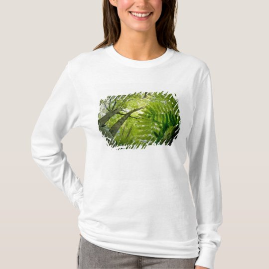 Forest scene in Acadia National Park, Maine. T-Shirt
