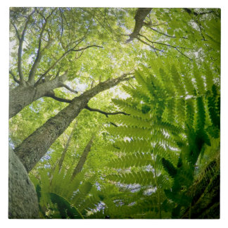 Forest scene in Acadia National Park, Maine. Tile