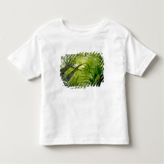 Forest scene in Acadia National Park, Maine. Toddler T-shirt