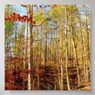 FOREST SCENE POSTER