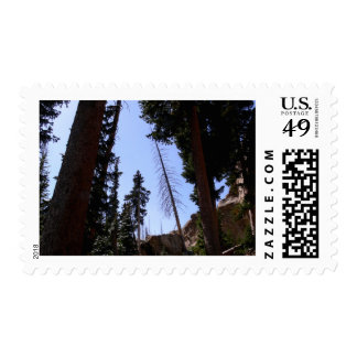 Forest Sky Postage