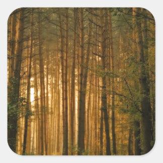Forest Square Sticker