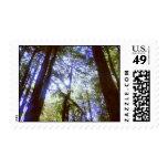 Forest Stamps Briefmarken