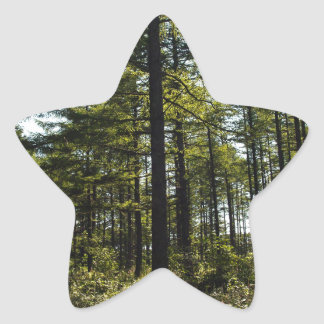 Forest Star Sticker
